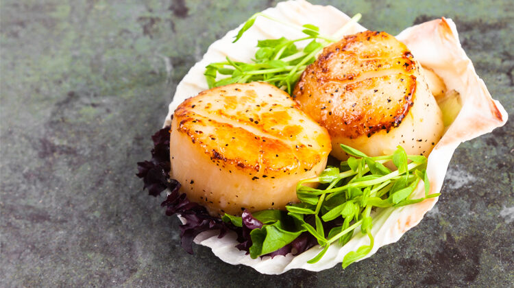 Can Dogs Eat Scallops