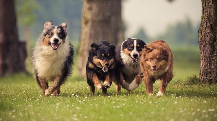 Dog Behavior Issues