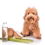 coconut oil for fleas